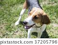 walk with dog 176 37205796