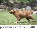 動物 狗 狗狗 37205803