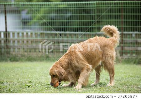 walk with dog 093 37205877