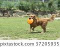 動物 狗 狗狗 37205935