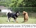 動物 狗 狗狗 37206179