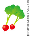radish, radishes, vegetables 37217486