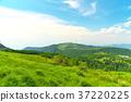 grass, field, grassland 37220225