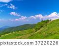 grass, field, grassland 37220226