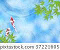 鲤鱼 树叶 锦鲤 37221605