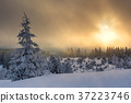 Wintertime - Black Forest Germany 37223746