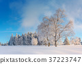 Wintertime - Black Forest Germany 37223747