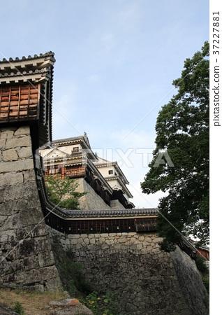 Matsuyama Castle 37227881