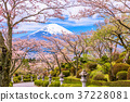 Fuji Mountain in Spring 37228081