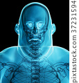 3d illustration Male Fat X-ray Shading, healthcare 37231594