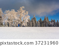 Wintertime - Black Forest Germany 37231960