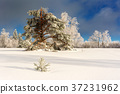 Wintertime - Black Forest Germany 37231962