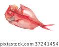 红金眼鲷 红鲷鱼 鲷鱼 37241454