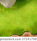 golf, grass, bunker 37241798