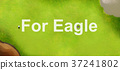golf, green, bunker 37241802