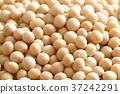 콩, 대두, 푸드 37242291