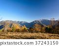 단풍, 초원, 풍경 37243150