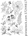 blossom, illustration, flower 37244617