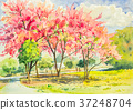 watercolor original landscape painting pink sakura 37248704