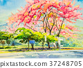 Painting watercolor landscape of beauty sakura. 37248705