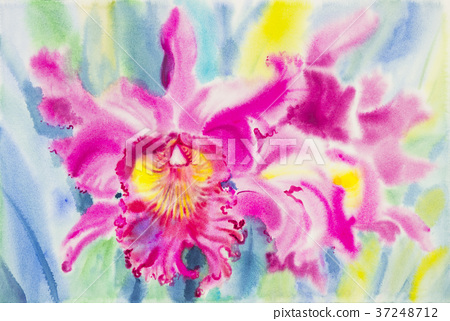 Watercolor painting pink color of orchid flower. 37248712