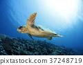 바다 거북 37248719