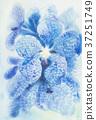 Painting, flower, flowers 37251749