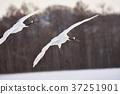 นก,ฤดูหนาว,ขนนก 37251901