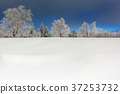 Wintertime - Black Forest Germany 37253732