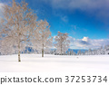 Wintertime - Black Forest Germany 37253734