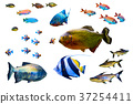 Fish collection isolated on white 37254411