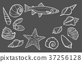 Hand drawn Seashell 37256128