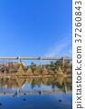 池塘 鹹水湖 風景 37260843