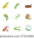 与众不同的 不同的 蜥蜴 37263889