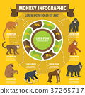 Monkey infographic concept, flat style 37265717