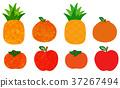 水果 柿子 甜柿 37267494