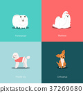 Set of dogs different breed vector illustration 37269680