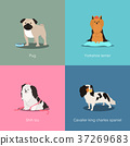 Set of dogs different breed vector illustration 37269683