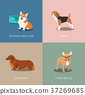 Set of dogs different breed vector illustration 37269685