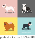 Set of dogs different breed vector illustration 37269689
