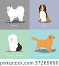 Set of dogs different breed vector illustration 37269690