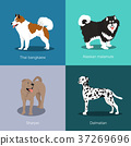 Set of dogs different breed vector illustration 37269696