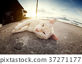 A lovely cat looking a camera by sleeping position 37271177