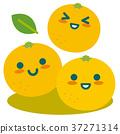 grapefruit, grapefruits, citrus 37271314