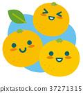 grapefruit, grapefruits, citrus 37271315