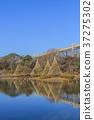 池塘 鹹水湖 冬天 37275302