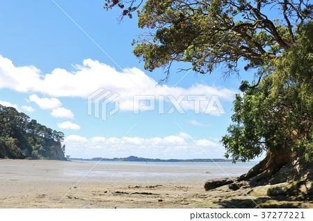 夏季新西蘭奧克蘭碉堡灣海灘 37277221