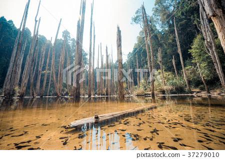 健忘的森林 37279010