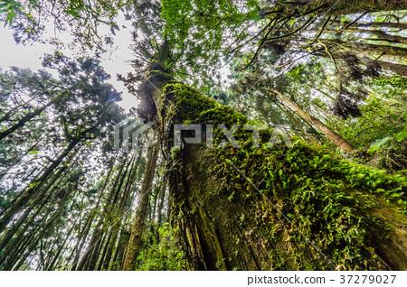 健忘的森林 37279027
