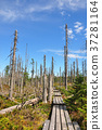 Dead wood in national park Bavarian Forest 37281164